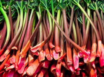 Le fruit du mois : la rhubarbe