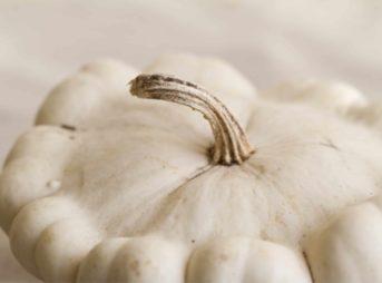 Le légume du mois : le pâtisson